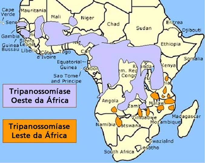 trypanosomiasis african sleeping sickness biology essay In the early part of the twentieth century, human african trypanosomiasis (hat), also known as sleeping sickness, decimated the population in many parts of sub-saharan africa.